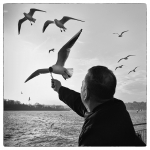 Feed the seagulls - Laurent Scelles